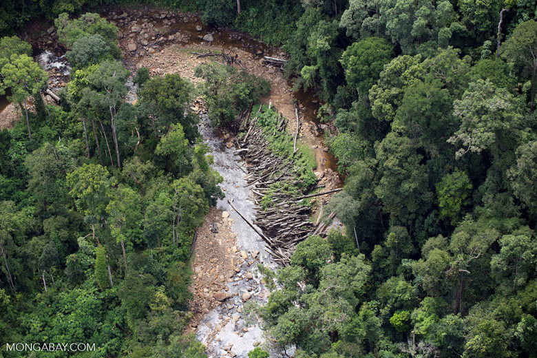 Logs in a river bed in Borneo -- sabah_aerial_1736