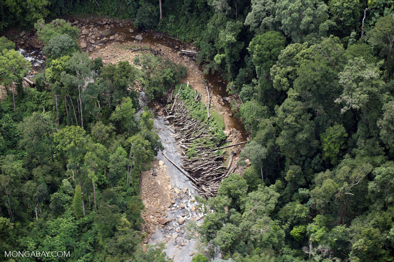 Logs in a river bed in Borneo -- sabah_aerial_1737