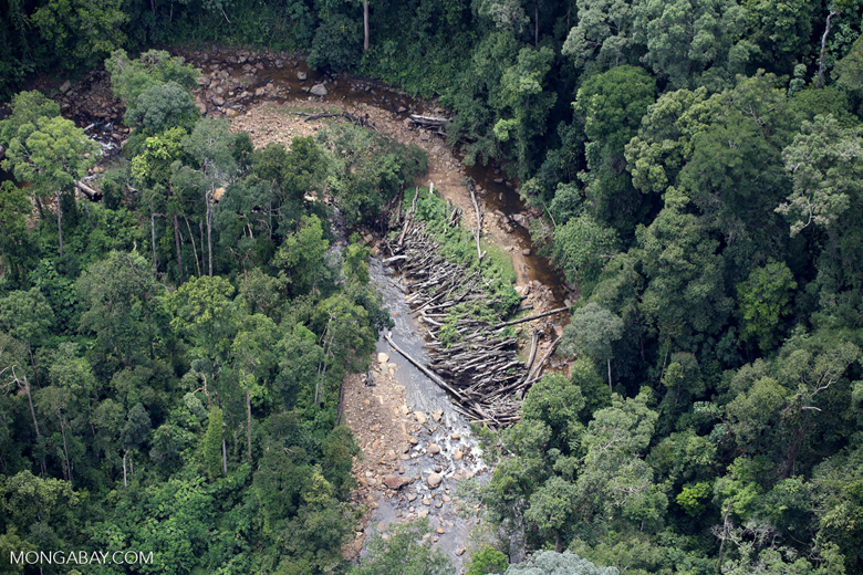 Logs in a river bed in Borneo -- sabah_aerial_1740
