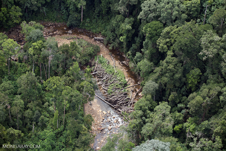 Logs in a river bed in Borneo -- sabah_aerial_1741