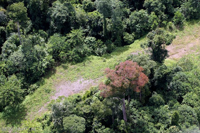 Flowering rainforest trees -- sabah_aerial_1756