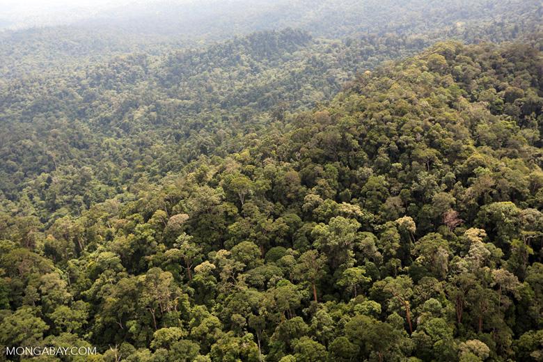 Borneo rainforest -- sabah_aerial_1774