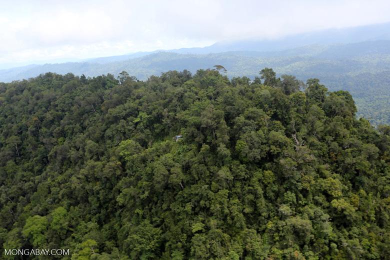 Borneo rainforest -- sabah_aerial_1775