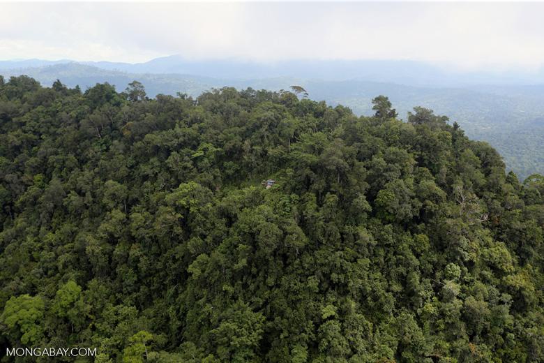 Borneo rainforest -- sabah_aerial_1778