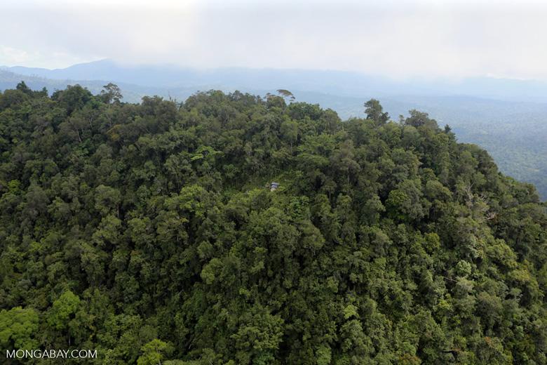 Borneo rainforest -- sabah_aerial_1780