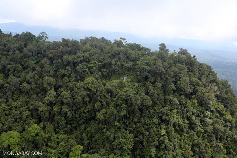 Borneo rainforest -- sabah_aerial_1781