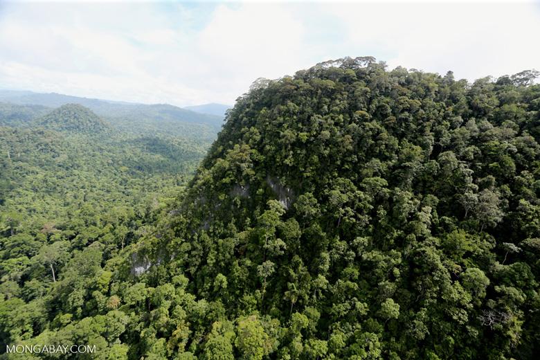 Borneo rainforest -- sabah_aerial_1784
