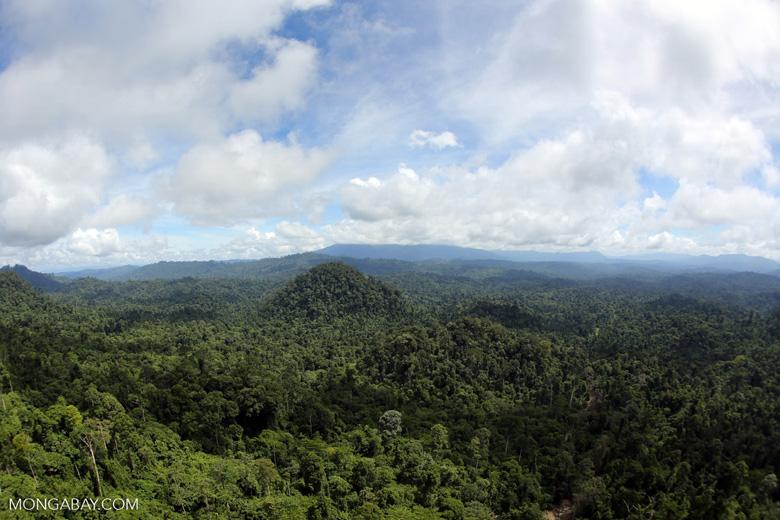 Borneo rainforest -- sabah_aerial_1791