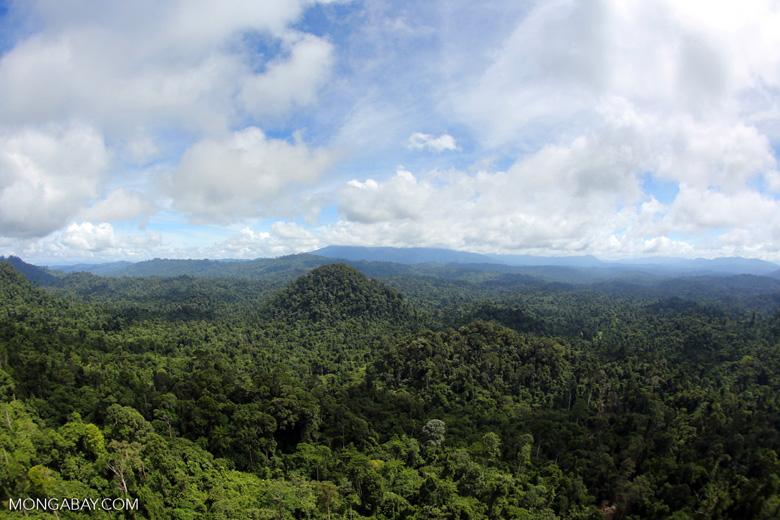 Borneo rainforest -- sabah_aerial_1792