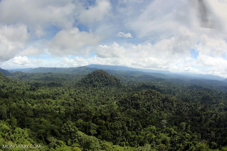 Borneo rainforest -- sabah_aerial_1793