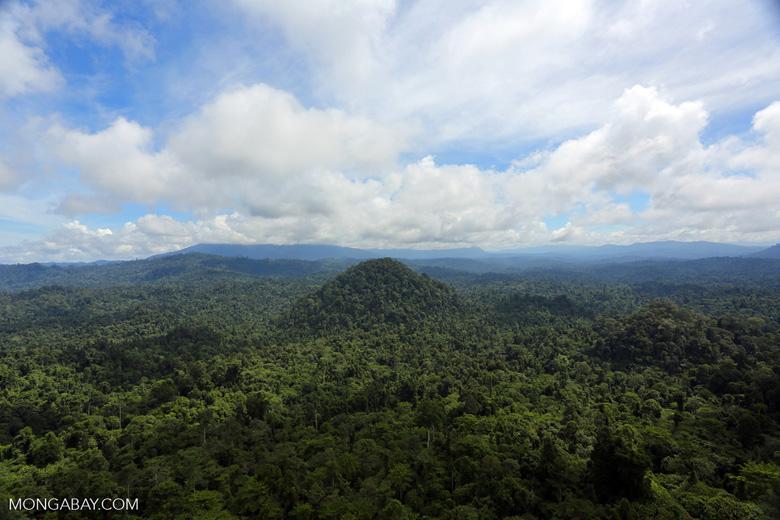 Borneo rainforest -- sabah_aerial_1796