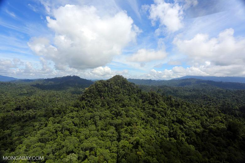 Borneo rainforest -- sabah_aerial_1801
