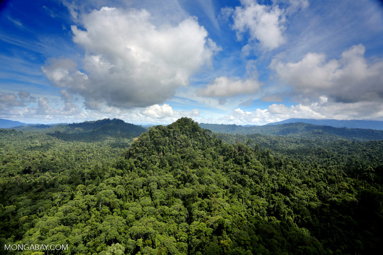 Tropical rainforest in Sabah, Malaysia on the island of Borneo.