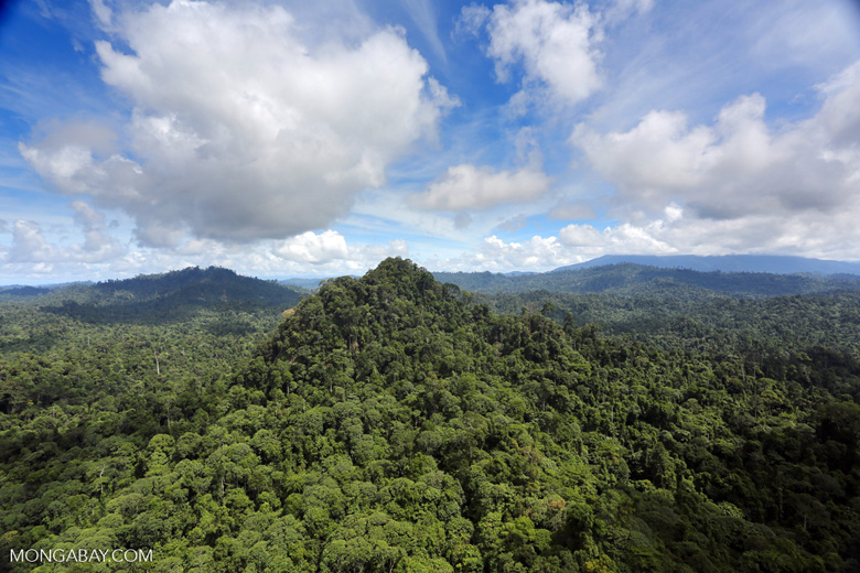 Borneo rainforest -- sabah_aerial_1804