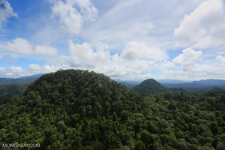 Borneo rainforest -- sabah_aerial_1810