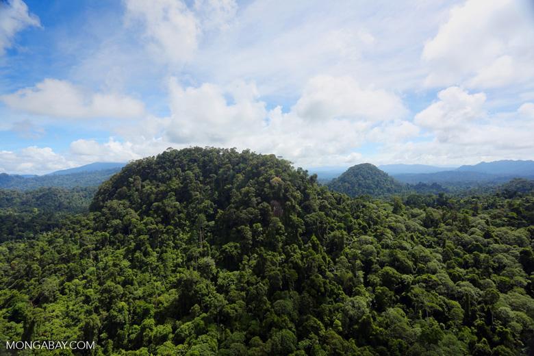 Borneo rainforest -- sabah_aerial_1811