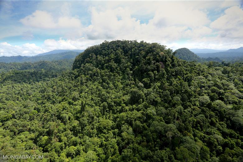Borneo rainforest -- sabah_aerial_1814