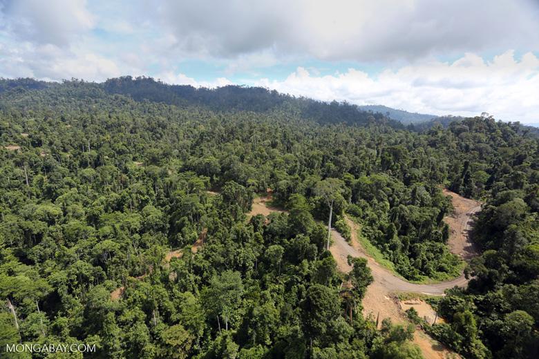 Logging operation in Borneo -- sabah_aerial_1832