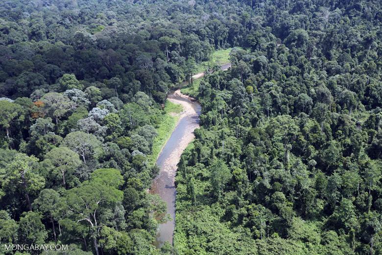 Borneo river -- sabah_aerial_1862