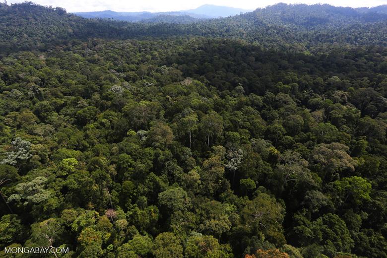 Borneo rainforest -- sabah_aerial_1881