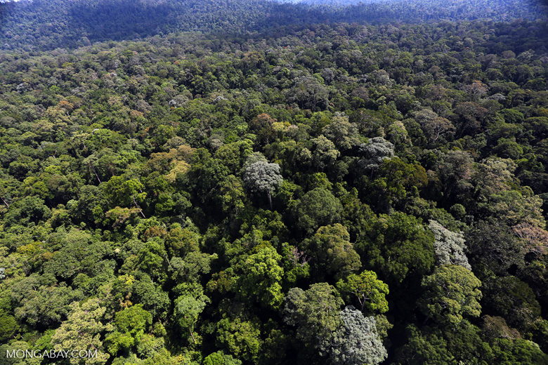 An aerial view of rainforest in Borneo. Image by Rhett A. Butler.