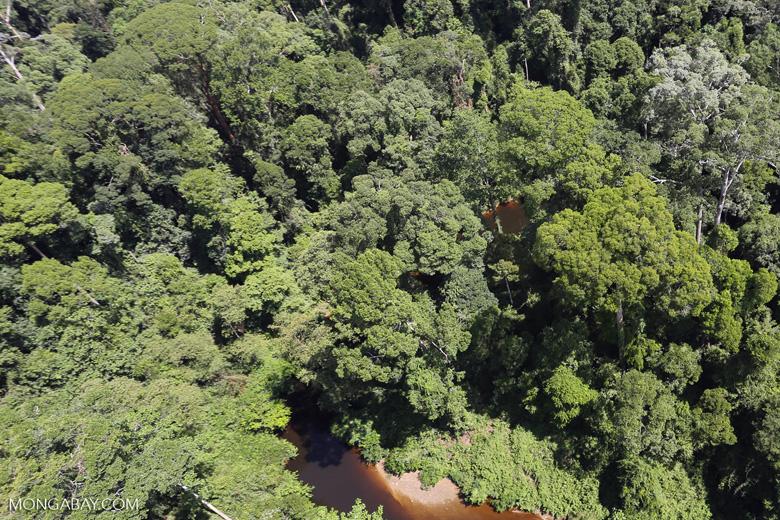 Imbak Canyon -- sabah_aerial_2005