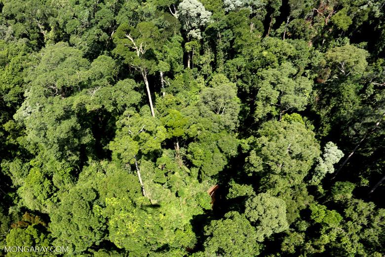 Imbak Canyon -- sabah_aerial_2075