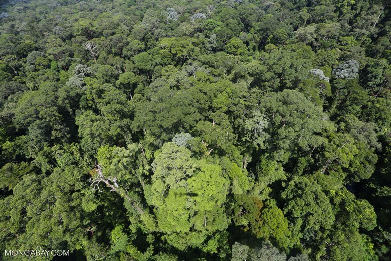 Imbak Canyon -- sabah_aerial_2083