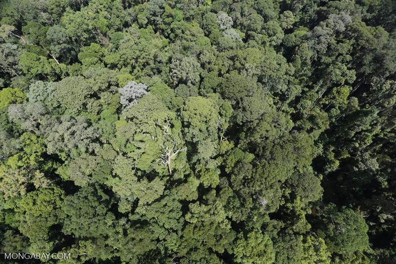 Imbak Canyon -- sabah_aerial_2100