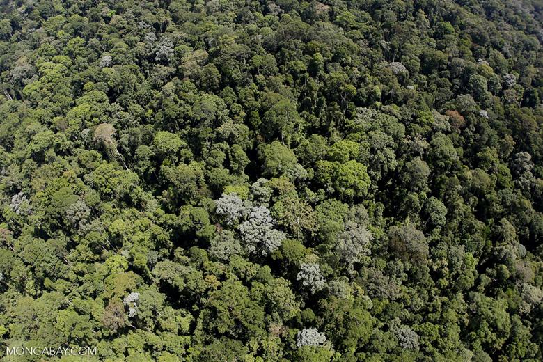 Imbak Canyon -- sabah_aerial_2131