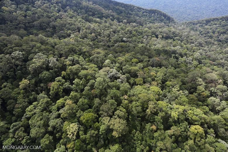 Imbak Canyon -- sabah_aerial_2168