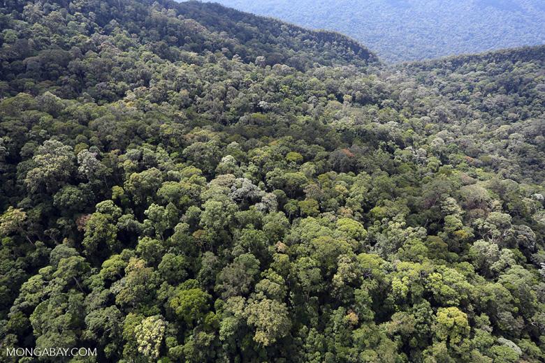 Imbak Canyon -- sabah_aerial_2170