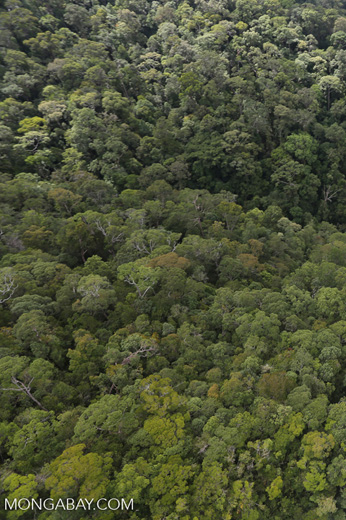 Imbak Canyon -- sabah_aerial_2179