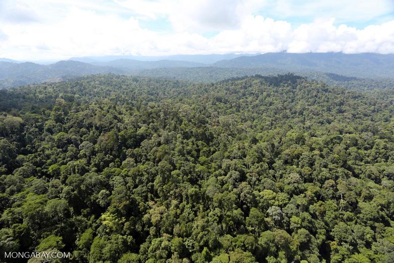 Imbak Canyon -- sabah_aerial_2233