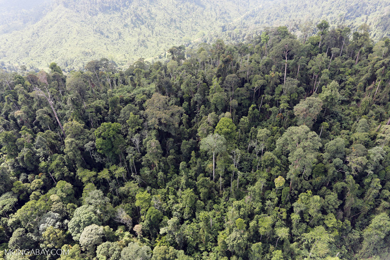 Selectively logged forest in Borneo -- sabah_aerial_2255