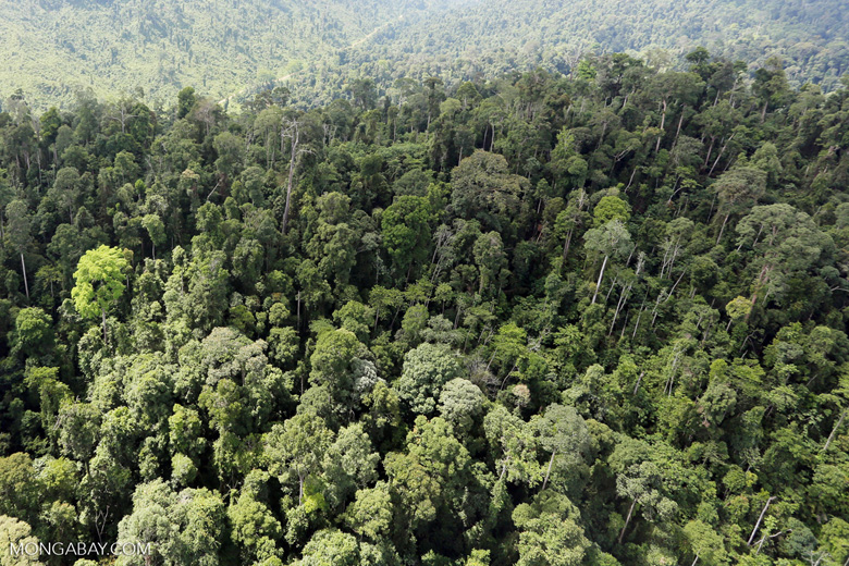 Selectively logged forest in Borneo -- sabah_aerial_2259