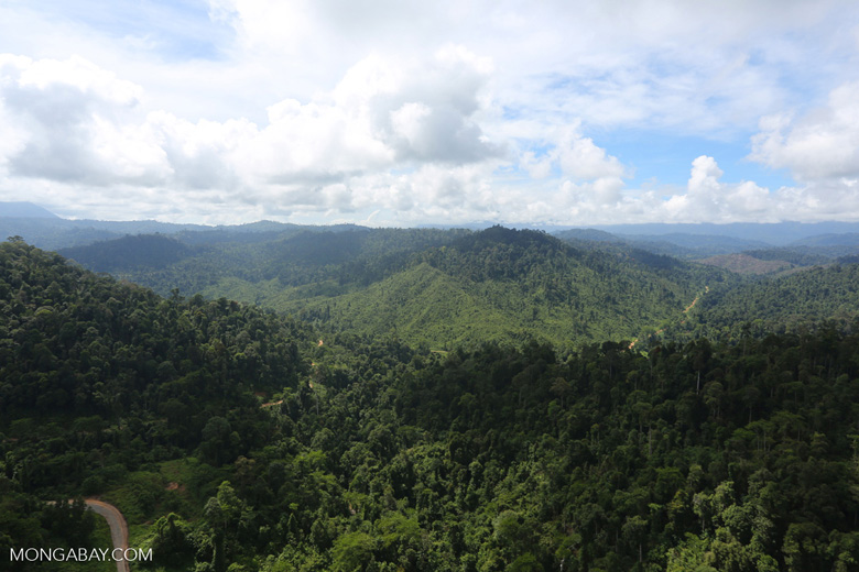 Selectively logged forest in Borneo -- sabah_aerial_2263