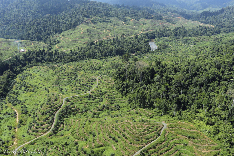 Rainforest converted to oil palm plantations in Borneo -- sabah_aerial_2280