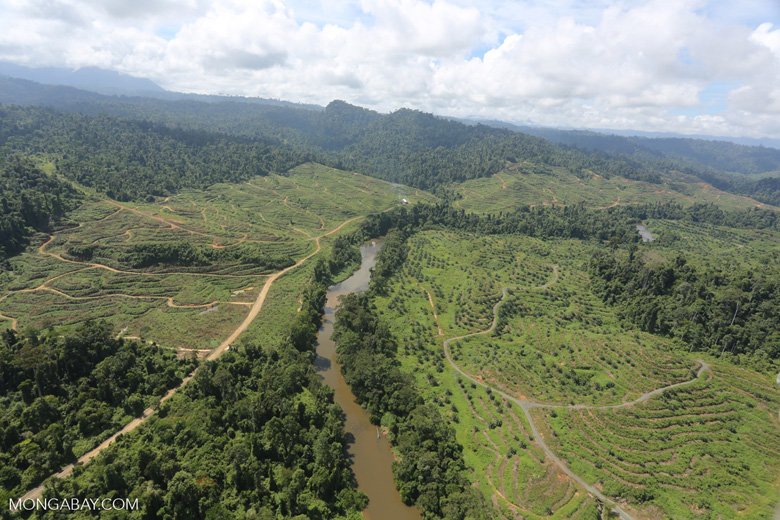Rainforest converted to oil palm plantations in Borneo -- sabah_aerial_2283