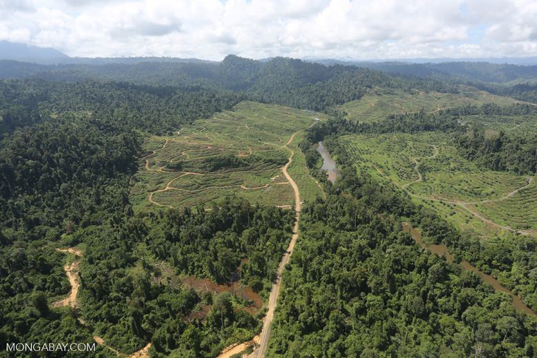 Rainforest converted to oil palm plantations in Borneo -- sabah_aerial_2288