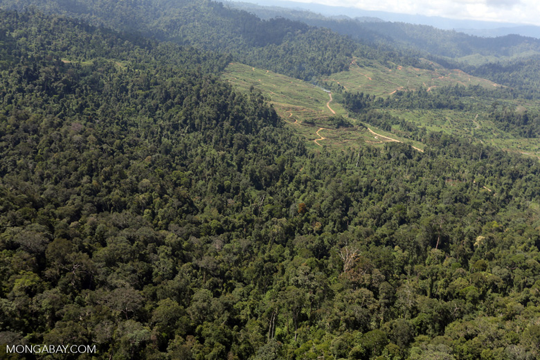 Rainforest converted to oil palm plantations in Borneo -- sabah_aerial_2295