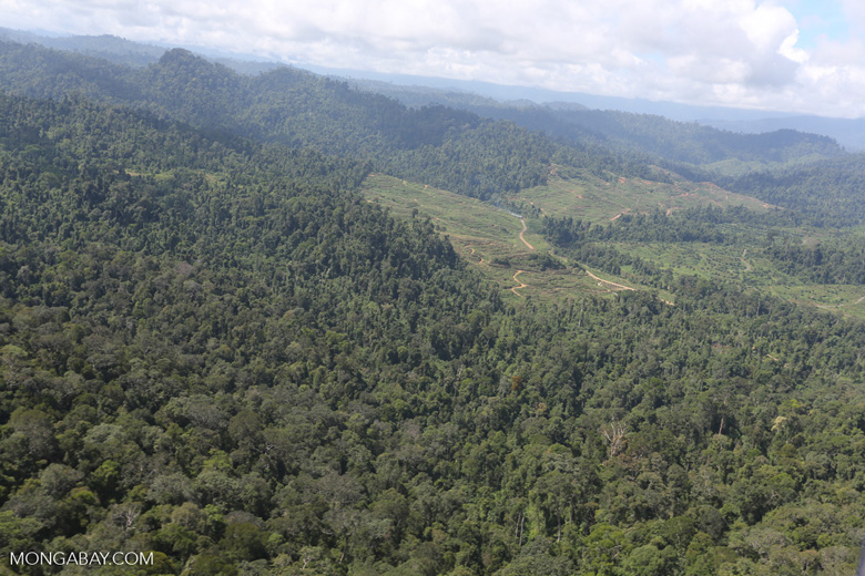 Rainforest converted to oil palm plantations in Borneo -- sabah_aerial_2296