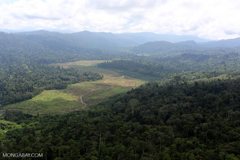 Deforested rainforest valley