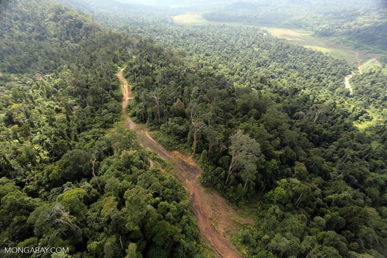 Logging road in Borneo -- sabah_aerial_2319