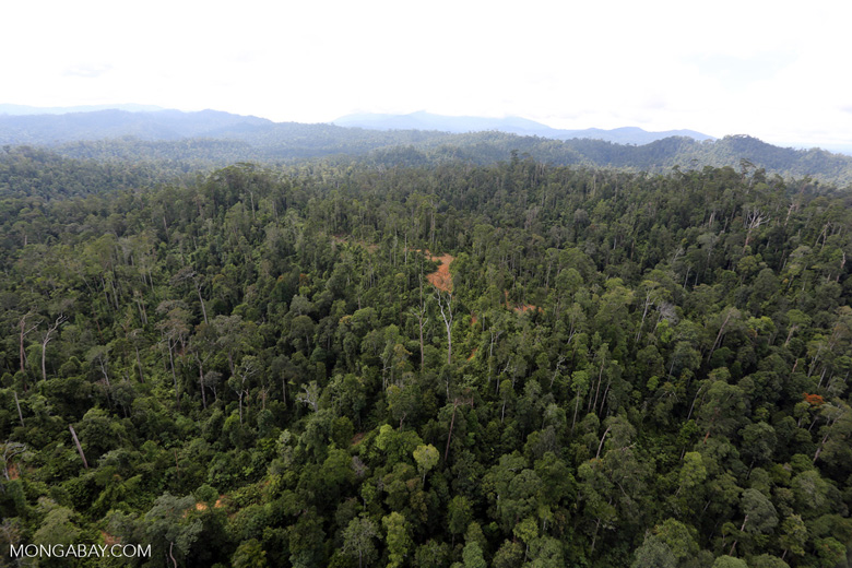 Selectively logged forest in Borneo