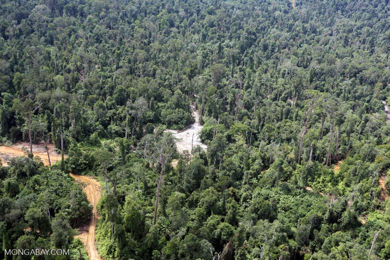 Active logging concession in Borneo -- sabah_aerial_2379