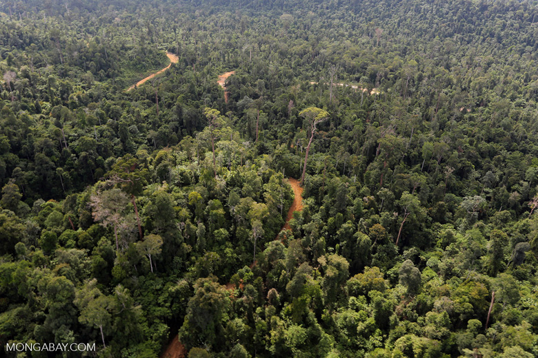 Active logging concession in Borneo