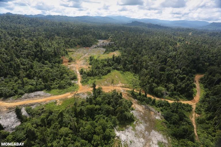 Logging road -- sabah_aerial_2396