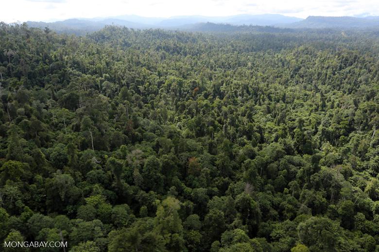 Borneo rainforest -- sabah_aerial_2409