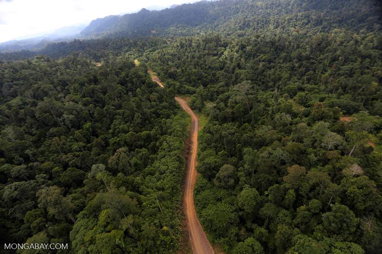 Logging road -- sabah_aerial_2459